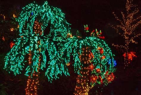 Christmas Lights Corona